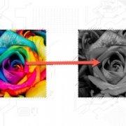 تبدیل عکس رنگی به سیاه سفید   رایانه کمک